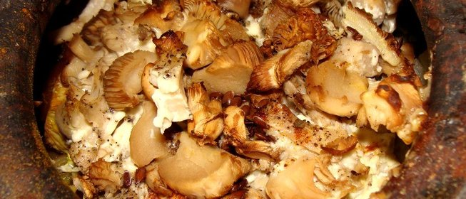 что приготовить из грибов вешанки