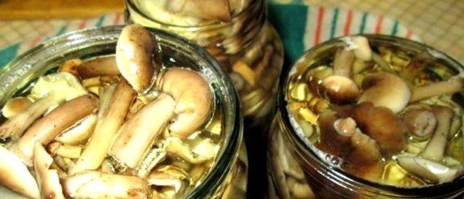 Соленые опята рецепт с фото пошагово